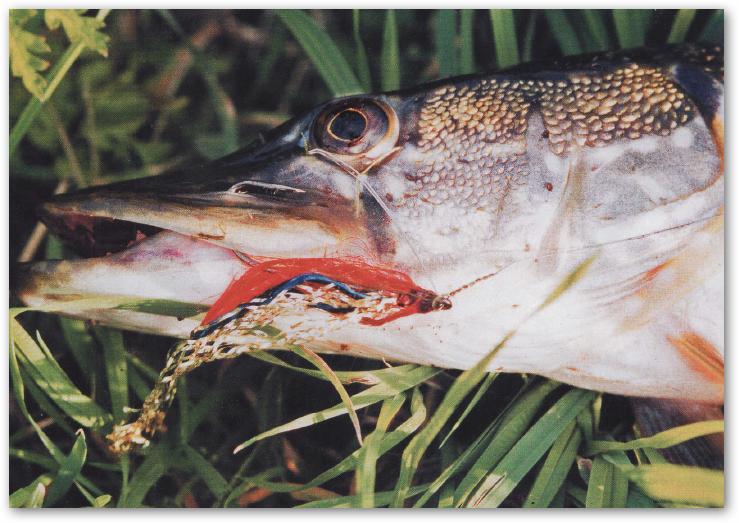 Прикормка для зимней рыбалки своими руками для